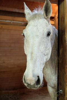 Kansas City Missouri Police Department- Mounted Patrol  Unit- #horses