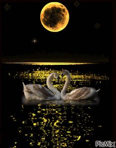 Good Night Gif, Good Night Image, Night Time, Beautiful Swan, Beautiful Birds, Beautiful Pictures, Romantic Couple Hug, Family Tree Quotes, Shoot The Moon