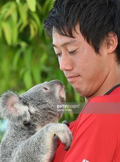 Top Japanese tennis player Kei Nishikori holds a koala on the sidelines of day three of the Brisbane International tennis tournament in Brisbane on January 6, 2015. AFP PHOTO / Saeed KHAN USE