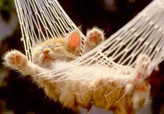 This kitten's got the right idea!