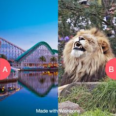 Amusement parks or zoos? Click here to vote @ http://getwishboneapp.com/share/7681585