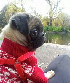 oh my goodness...little sweater!!!