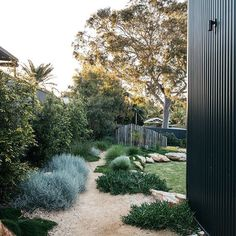 A simply beautiful contemporary Australian native Garden done so well. Garden design Plants supplied by A simply beautiful contemporary Australian native Garden done so well. Garden design Plants supplied by Australian Garden Design, Australian Native Garden, House Landscape, Landscape Plans, Canada Landscape, Modern Landscape Design, Modern Design, Landscaping Plants, Front Yard Landscaping