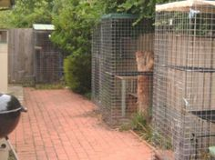 A group of smaller Cat Enclosures with Tunnel connectors -