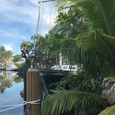 Not our boat but nothing says tropical adventure like a sailboat under palm trees... #ftlauderdale #sailboatbend #summervacation #travelblogrepeat #summeradventure #florida July 20 2018 at 02:36AM