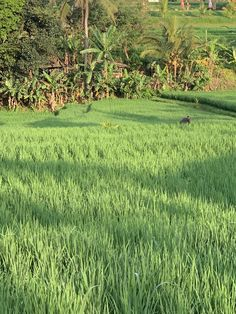 Getting up early to catch the sun just rising over Ubud is magical. It's one of the optional activities on our retreats