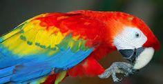 Resultado de imagem para imagens bonitas da amazonia