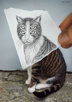 Pencil versus Camera cats