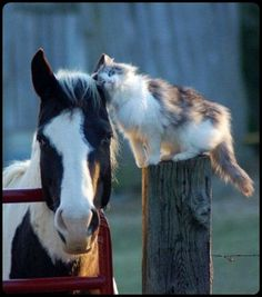 best friends… horses and cats?