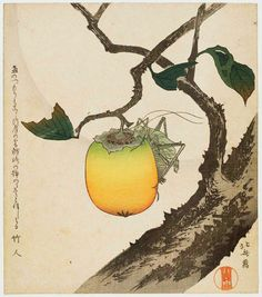 Japanese woodblock prin Katsushika Hokusai.  Grasshopper and Persimmon.   Late 18th - early 19th century