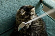 Valerian Fish Toy for Cats, from Craft Leftovers