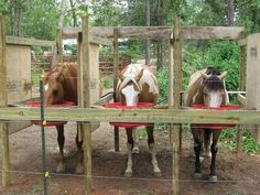 If you need to feed your horses grain outside... this can be a safe alternative. notice the solid dividers between their heads: its to prevent food aggression and the need to defend their food from others. it also helps reduce the chance of choke from bolting down their feed.