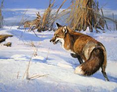 """Snow Tracker"" 24 x 30 Oil (Available at my one man show at the Legacy gallery on August Bozeman, Montana) Wildlife Paintings, Wildlife Art, Animal Paintings, Animal Drawings, Fox Painting, Extinct Animals, Fox Art, Western Art, Nature Animals"