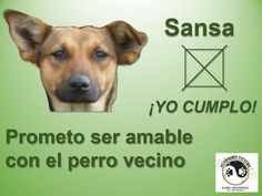 Con tu voto gana. INFO 864 8485 --- 311 803 12 94 Movie Posters, Animals, Be Kind, Vows, Dogs, Animales, Animaux, Film Poster, Animal