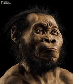 A photo from the October issue of National Geographic shows a reconstruction of Homo naledi's face. (Mark Thiessen/National Geographic via AP) National Geographic, Charles Darwin, Hominid Species, Human Family Tree, University Of The Witwatersrand, France Tv, Face Change, Especie Animal, Homo