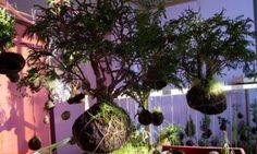 Quiero árboles asiiii