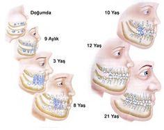 Müxtelif yaş dövrlerinde dişlerin inkişafı #dislerininkisafi #dishekimi #stomatolojimerkez #hekimstomatoloq #ramizmustafayev #keramika #protez #disdaslari #agrisizmualice #kariesinmualicesi #sterilaletler #sterilserait #dental #dentalgram #dentist #dentalwork #estheticdentist #dentistry #health #teeth #smile #dent #azerbaijan #stomatolog by dr_ramiz_mustafayev Our General Dentistry Page: http://www.lagunavistadental.com/services/general-dentistry/ Google My Business…