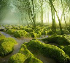 Rozprávková krajina sa nachádza aj v Európe a je ňou Rumunsko Beautiful Forest, Beautiful Places, Amazing Places, Amazing Photos, Amazing Things, Wonderful Places, Landscape Photography, Nature Photography, Amazing Photography