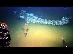 Searching for Life at the Rosebud Whale Fall   Nautilus Live - YouTube