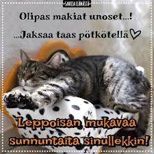 Sanoja elämästä - Mukavaa sunnuntaita 🧡 | Facebook Sunday Quotes, Facebook, Cats, Animals, Gatos, Animales, Animaux, Animal, Cat