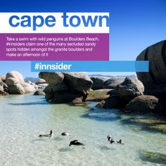 Waddle. Take a swim with wild penguins at Boulders Beach. #Innsiders claim one of the many secluded sandy spots hidden amongst the granite boulders and make an afternoon of it.