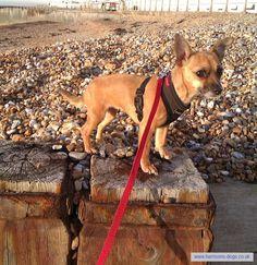 Clapham Dog Walker www.harrisons-dog... Dog Walker Clapham Balham Tooting and Wandsworth