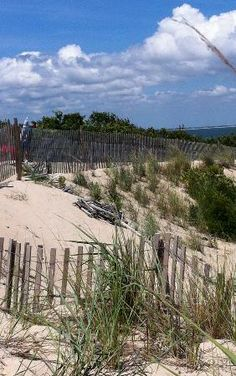 Lewes Delaware State Park | ... army base - Picture of Cape Henlopen State Park, Lewes - TripAdvisor