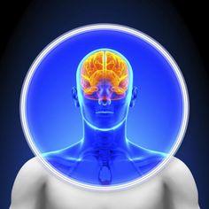 Neurociencia: ¿con qué parte del cerebro respondes a la vida