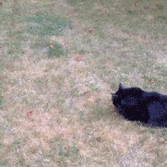gato pelota