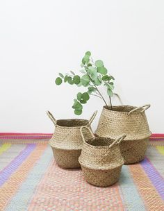 FALL SALE 20% / Seagrass Basket for Planter and Spray in 3