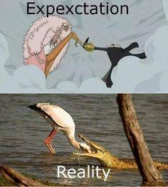 #onepiece Flamingo X Crocodile