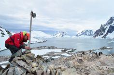 Camera overlooking Gentoo penguin colony