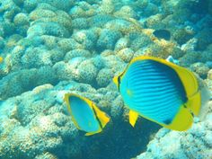 Fonds marins des Gili Under The Sea, Life Is Good, Bali, Pets, Sailors, Wild Life, Travel, Weather, Life Is Beautiful