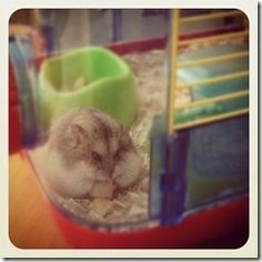 Fat Hamsters are bottom feeders.