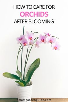 Orchid Care After Flowering, Orchid Plant Care, Orchid Plants, Indoor Orchids, Indoor Flowering Plants, Orchids Garden, Indoor Flowers, Potted Plants, Pruning Orchids