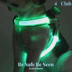 LED Pet Harness. Shop now!