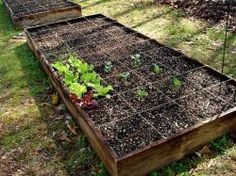 Growing Food Can Be Easy