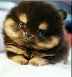 Fluffy puppy soooooooooooooooooooooooooooooo cute