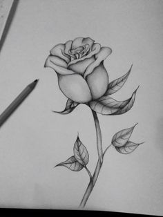 Art Sketches Ideas First attempt at a black and grey rose Best Art Pin is part of Pencil art drawings - First attempt at a black and grey rose First attempt at a black and grey rose Rose Drawing Tattoo, Flower Art Drawing, Pencil Drawings Of Flowers, Flower Sketches, Cool Art Drawings, Pencil Art Drawings, Art Drawings Sketches, Easy Drawings, Tattoo Drawings