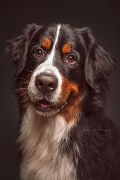 Dog Breeds Little, Best Dog Breeds, Beautiful Dogs, Animals Beautiful, Pet Dogs, Dogs And Puppies, Cute Dog Collars, Best Dog Toys, Dog Accessories