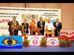 EXPOSICION NACIONAL ESPECIAL RAZAS ESPAÑOLAS MADRID 2014