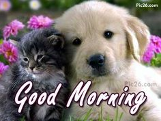 Kitty and puppy Good Morning Sister Quotes, Good Morning Puppy, Good Morning Animals, Good Morning Wishes Gif, Good Night Wishes, Happy Morning, Good Morning Picture, Good Morning Greetings, Morning Pictures