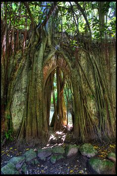 All sizes   Church Roots   Flickr - Photo Sharing!
