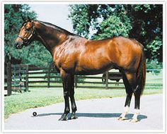 Dr. Caton(1993)Seattle Slew- Won't She Tell By Banner Sport. 4x5 To Princequillo. 5x5 To Nasrullah And Polynesian. 12 Starts 3 Wins 1 Second 3 Thirds. $272,340. Won Long Branch Stakes, 2nd Haskell(G1).