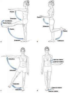 Hip Flexor Pain, Hip Flexor Exercises, Hip Pain, Back Exercises, Back Pain, Hip Flexors, Stretches, Human Body Anatomy, Human Anatomy And Physiology