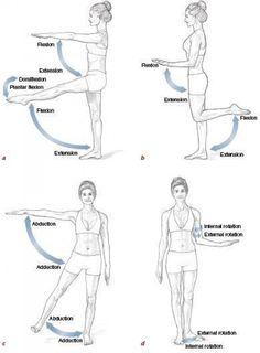 Hip Flexor Pain, Hip Flexor Exercises, Hip Pain, Back Exercises, Back Pain, Hip Flexors, Easy Stretches, Human Body Anatomy, Human Anatomy And Physiology