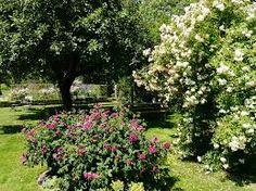 Bildergebnis für holländische gärten