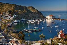 Catalina...such a random little island but so quaint and full of quirky Hollywood history.
