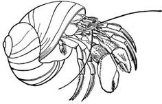 Wild Animal Embroidery Designs: Hermit Crab Embroidery Pattern