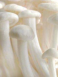 'Enoki Forest' by John Poon All White, Pure White, White Mushrooms, White Picture, White Space, Shades Of White, Fungi, My Favorite Color, Amazing Photography